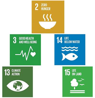 Figure 1: Food-related UN SDGs